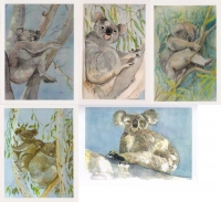 Koalas Greeting Cards